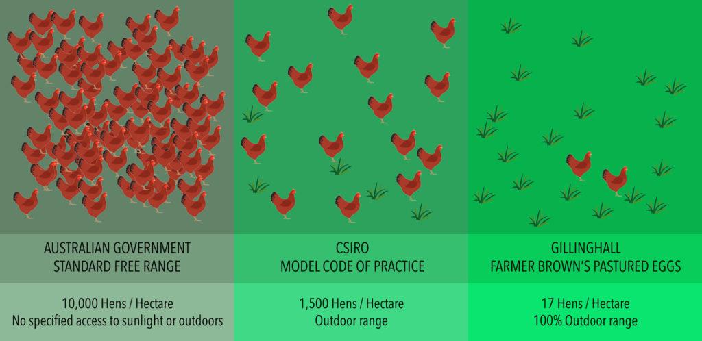 Hens per Hectare Infogram